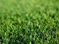 Купить и вырастить газон проще, чем вы думали!