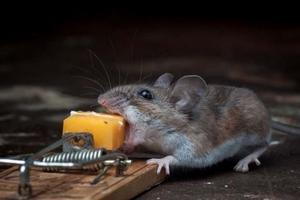 Ловись мышка...