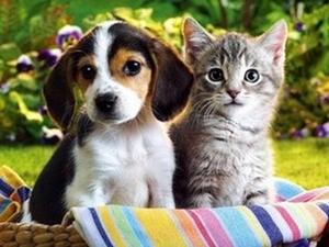 Ветеринарная медицина в Туле