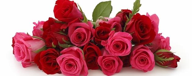 Самые свежие розы купить доставка цветов в сантк-петербурге