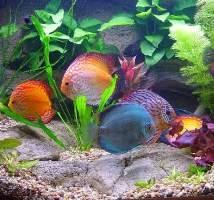 Путешествие в чарующий мир аквариумистики