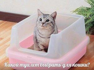 Какой туалет выбрать для кошки?