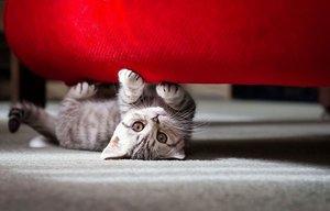 Без кота и жизнь не та или износостойкие мебельные ткани