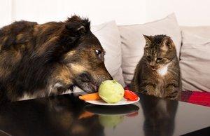 Специальный корм VS домашняя еда? Развенчиваем МИФЫ!