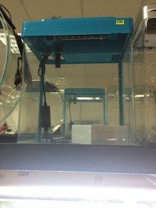 Самоочищающийся аквариум или как проще содержать аквариумных рыбок