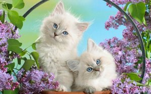 Лечение кошек в Туле - позаботьтесь о здоровье своего питомца!