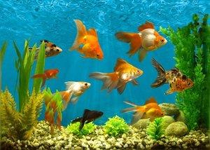 Аквариумы в Орске и все для них! Аквариумные рыбки, корма и аксессуары!