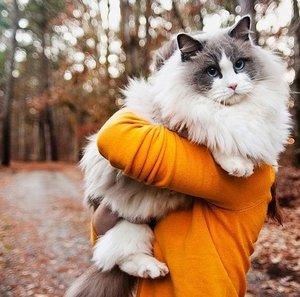 Лечение кошек в Туле доверьте компетентным ветеринарам!