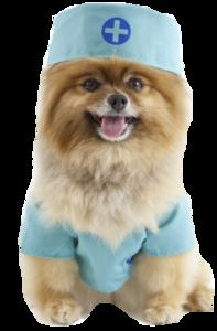 Ветеринарная хирургия. Хирургия животным в ветеринарной клинике «Дай лапу»