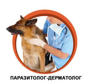 Ветеринарный дерматолог