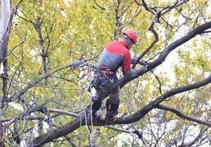 Кронирование деревьев профессионалами в Вологде