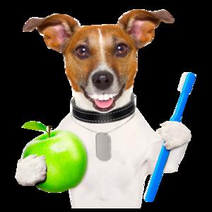 Ультразвуковая чистка зубов домашних животных
