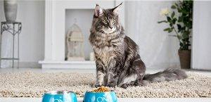 Профилактика МКБ у котов