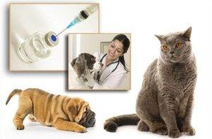 Где сделать прививку домашнему животному в Орске? Привить своего питомца. Первая вакцинация