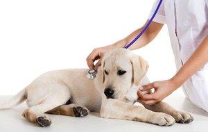 Эффективное и недорогое лечение собак в Череповце