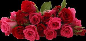 Эквадорские розы на последний звонок и выпускной.