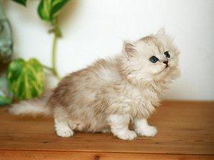 Как выбрать средство от глистов у кошек?
