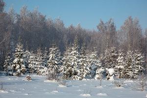 В лесу родилась елочка… Новогодняя программа для младших школьников