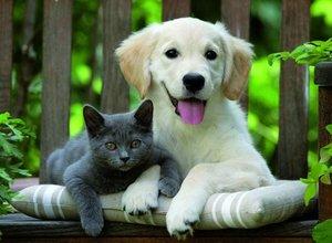 Эндоскопия у собак и кошек - эффективный способ диагностики!