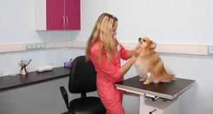 Диагностика и лечение собак в Туле