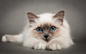 Мочекаменная болезнь кошек - причины и особенности заболевания