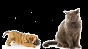 Стерилизация кошек и собак Орск