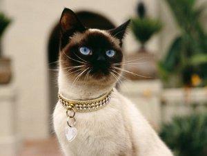 Стерилизация кошек в Туле - быстро, безболезненно!