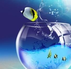 Все лето СКИДКА 20% на аквариумных рыб в магазине «38 попугаев»!
