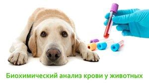 Лабораторная диагностика в Ветеринарном центре доктора Новичихиной А. В