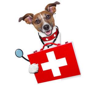 Интенсивная терапия животных - скорая помощь питомцу!
