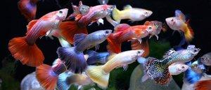 Аквариумные рыбки в магазине