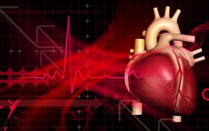 Сделать УЗИ сердца в Вологде