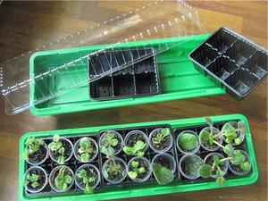 Пластиковые парники для выращивания растений на подоконнике