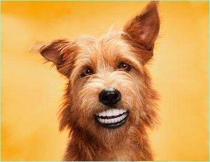 Стоматология для животных - всё как у людей!