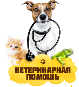 Ветеринар Орск