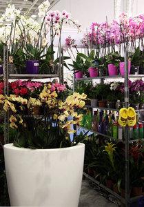 Цветущие комнатные цветы в наличии. Комнатные растения