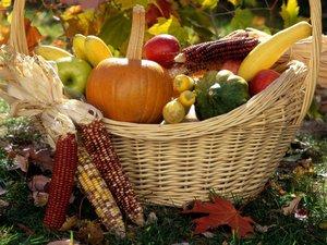 Садовые товары, техника, инвентарь для консервации – пригласите его величество Урожай к столу!