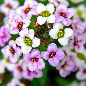 НОВИНКИ! Цветы, деревья, композиции, не требующие ухода!