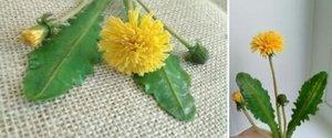 """Мастер-класс """"Живые цветы"""""""