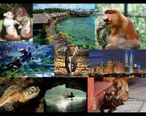 Туры в Малайзию из Новосибирска.