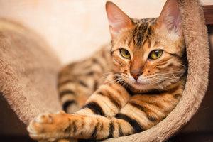 Кастрация кота в Череповце