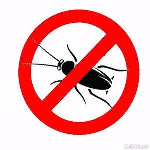 Служба по уничтожению тараканов в Орске