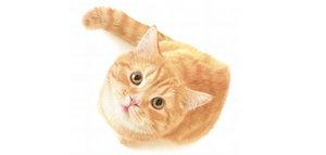 Стерилизация кошек во время течки: можно или нет?