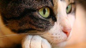 Виды вирусных заболеваний кошек: симптомы, лечение, профилактика
