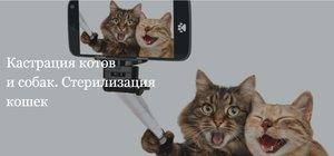 ЛАПАРОСКОПИЧЕСКАЯ (эндоскопический способ) стерилизация кошек!!!🐈