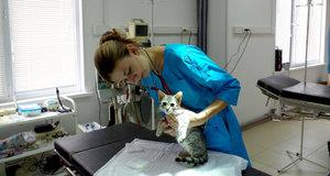 Лечение животных в Туле доверьте опытным ветеринарам!