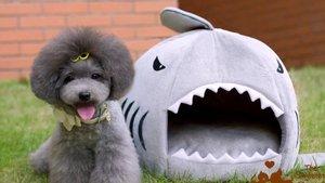 Большой ассортимент игрушек и домиков для домашних животных