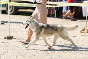 """24 мая с 10-00 Выставка собак на открытой площадке СКК """"Спектр"""""""