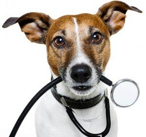 Анализы собаки в Туле