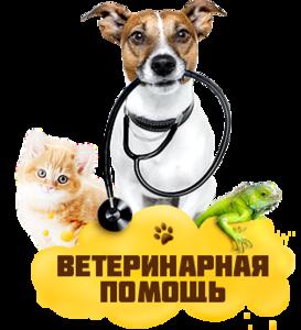 Ветеринар Череповец